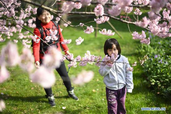 Tourists view cherry blossoms by the East Lake in Wuhan, central China's Hubei Province, March 13, 2019. (Xinhua/Xiong Qi)