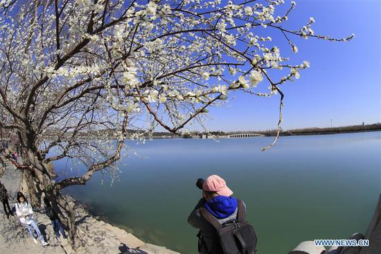 A visitor takes photos of the scenery near Kunming Lake in the Summer Palace in Beijing, capital of China, on March 13, 2019. (Xinhua/Liu Xianguo)