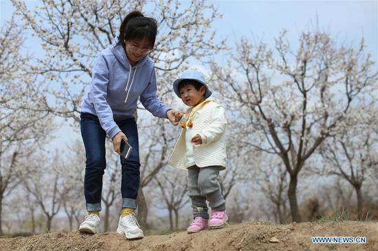 Tourists visit an apricot forest in full bloom in Tangwang Township of Dongxiang Autonomous County in Linxia Hui Autonomous Prefecture, northwest China's Gansu Province, April 3, 2019. (Xinhua/Ma Ping)