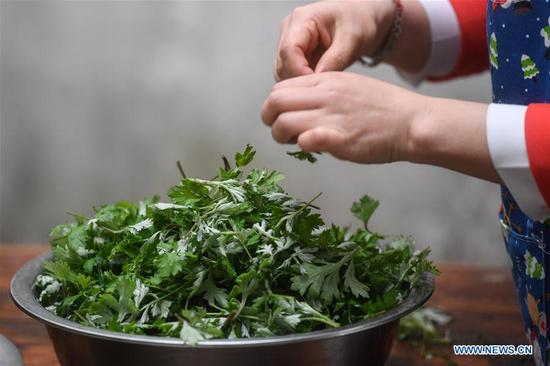 A villager picks wormwood leaves to make Qingtuan, or green sticky rice balls, in Yiyanshan Village of Huzhou, east China's Zhejiang Province, April 4, 2019. Qingtuan, made from glutinous rice mixed with wormwood juice and stuffed with bamboo shoot, tofu and preserved meat, is a traditional snack popular mailnly among people living in the south of Yangtze River during the Qingming Festival also known as Tomb Sweeping Day. (Xinhua/Huang Zongzhi)