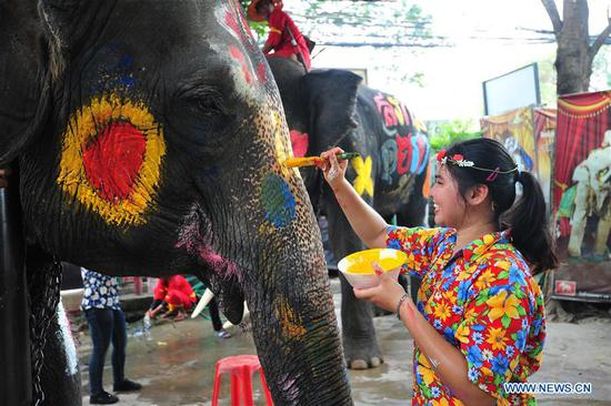 A woman paints on an elephant during a celebration for the upcoming Songkran festival, Thailand's traditional New Year Festival, in Ayutthaya, Thailand, April 11, 2019. (Xinhua/Rachen Sageamsak)
