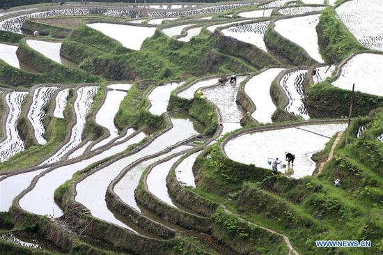 Villagers work in a terraced field in Jiabang Township of Congjiang County, southwest China's Guizhou Province, April 20, 2019. Guyu, literally meaning
