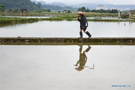 A farmer walks across a field in Pingjiang Village of Dunzhai Town, Jinping County of southwest China's Guizhou Province, May 5, 2019. Farmers are busy with agricultural production in the farming season around Lixia, a solar term in the Chinese calendar signifying the beginning of summer. (Xinhua/Peng Zeliang)