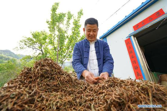 Qu Baomin arranges tea leaves to be aired at his tea garden at Tonghua Village in Lincheng County, north China's Hebei Province, May 7, 2019. In 2012, Qu Baomin and his wife Yang Suzhen contracted 30 mu (two hectares) of lands to plant tea at the village. Over the years, Qu has dedicated to organically farming his tea garden to ensure high tea quality, by which his products have been well received in some big cities across the country, including Beijing and Tianjin. Under his leading in tea planting, over 100 people living in surrounding areas have been lifted out of poverty. (Xinhua/Mu Yu)