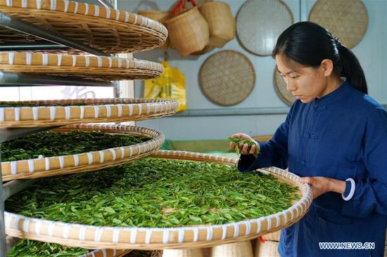 A worker checks tea quality at Qu Baomin's tea garden at Tonghua Village in Lincheng County, north China's Hebei Province, May 7, 2019. In 2012, Qu Baomin and his wife Yang Suzhen contracted 30 mu (two hectares) of lands to plant tea at the village. Over the years, Qu has dedicated to organically farming his tea garden to ensure high tea quality, by which his products have been well received in some big cities across the country, including Beijing and Tianjin. Under his leading in tea planting, over 100 people living in surrounding areas have been lifted out of poverty. (Xinhua/Mu Yu)