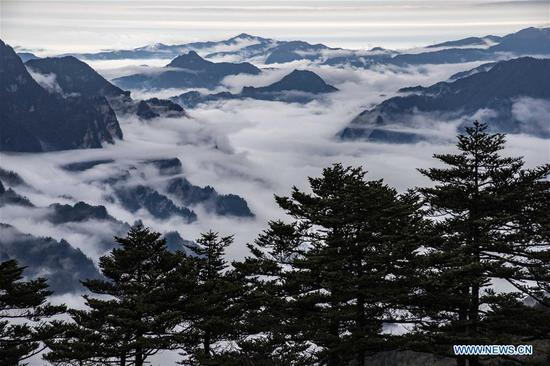 Photo taken on Oct. 20, 2018 shows the scenery of cloud sea at Shennongjia National Park in central China's Hubei Province. (Xinhua/Du Huaju)