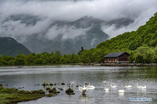 Photo taken on May 18, 2018 shows the scenery of the Dajiu Lake at Shennongjia National Park in central China's Hubei Province. (Xinhua/Du Huaju)