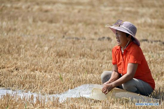 A farmer irrigates drought-affected fields at Rendezhuang Village of Haowangzhuang Township in Wucheng County, east China's Shandong Province, June 27, 2019. Severe drought is affecting east China's Shandong Province. The latest statistics showed that the drought had inflicted damage on about 17.838 million mu (1.19 million hectares) of crops, which accounted for 21.9 percent of the whole crop area in fields. Shandong authorities have launched an emergency response against the drought. (Xinhua/Guo Xulei)