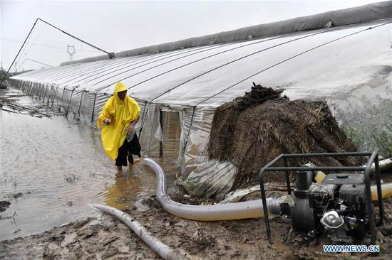 A farmer gets rid of water from a flooded greenhouse in the aftermath of Typhoon Lekima in Dongfangxi Village of Jitai Township, Shouguang, east China's Shandong Province, Aug. 12, 2019. Floodwater inundated 18,000 vegetable greenhouses in Shouguang, a major vegetable production base in China, after Typhoon Lekima wreaked havoc there with torrential rains and strong gales. (Xinhua/Guo Xulei)