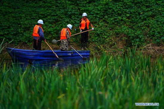 Staff members of China Railway Xiongan Construction Co., Ltd. clear up wastes for a pond at Yipuxi village of Xiongzhou town in Xiongan New Area, north China's Hebei Province, Aug. 14, 2019. Xiongan New Area started the work to clean up all its polluted ponds in 2018. By now, over 800 polluted ponds have been finished in stages of refuse disposal, wastewater filtration and comprehensive environmental improvement. The main work now has turned to the ecological restoration to those treated ponds, which is expected to be finished by end of 2019. (Xinhua/Xing Guangli)