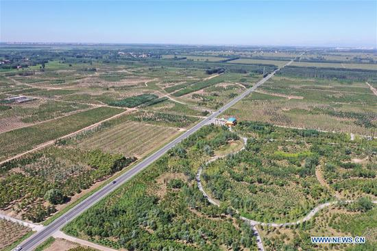 Aerial photo taken on Aug. 29, 2019 shows trees grown as a part of an afforestation project in Xiongan New Area, north China's Hebei Province. According to the Administrative Committee of Xiongan New Area, Xiongan has entered a phase of large scale construction. (Xinhua/Xing Guangli)