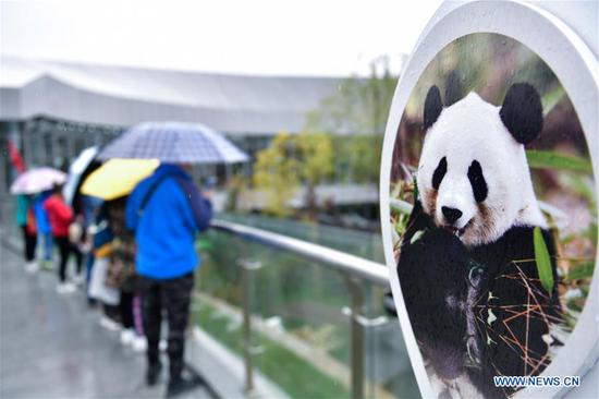 Tourists visit Xining Panda House during the National Day holiday in Xining, capital of northwest China's Qinghai Province, Oct. 6, 2019. (Xinhua/Zhang Long)