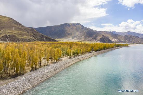 Photo taken on Oct. 7, 2019 shows woods on the south bank of Lhasa River in Lhasa, southwest China's Tibet Autonomous Region. (Xinhua/Zhang Rufeng)