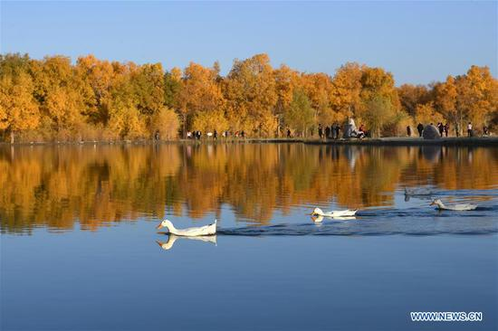 Photo taken on Oct. 21, 2019 shows a view of the Jinta desert populus euphratica forest scenic spot in Jiuquan, northwest China's Gansu Province. (Xinhua/Ma Ning)