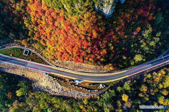 Aerial photo taken on Oct. 31, 2019 shows red leaves along a road in Wu'an City, north China's Hebei Province. The Taihang mountains attract lots of visitors as the leaves change colors in autumn. (Xinhua/Wang Xiao)
