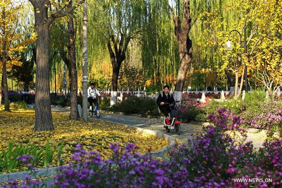 Photo taken on Nov. 7, 2019 shows the autumn scenery of Tsinghua University in Beijing, capital of China. (Xinhua/Li Jing)