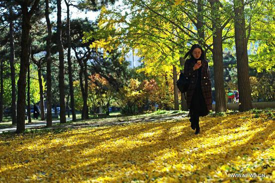 A student walks on fallen leaves at Tsinghua University in Beijing, capital of China, Nov. 7, 2019. (Xinhua/Li Jing)