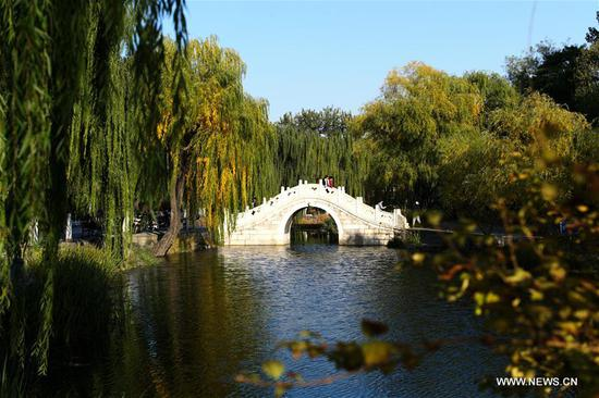 Photo taken on Nov. 7, 2019 shows Jinchun Garden of Tsinghua University in Beijing, capital of China. (Xinhua/Li Jing)