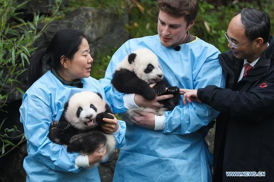 Keepers holding the panda twins