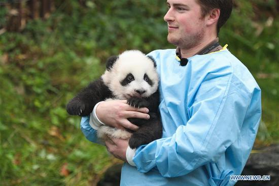 A zookeeper holds the panda