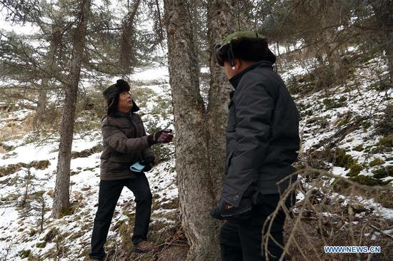 Ranger Feng Dejun (L) and Zhang Detuan check a tree's condition during thier patrol in the Qilian Mountains in Jinchang County, northwest China's Gansu Province, Jan. 15, 2020. Located deep in the Qilian Mountains in Jinchang County, there is a natural resource protection station with nine rangers, who patrol over 20 times every month with the longest round-trip distance up to 50 kilometers. And in the winter, a critical period for forest fire prevention, they often have to patrol on foot as it is too dangerous to ride motorcycles on some parts of snow-covered mountain roads. (Xinhua/Ma Ning)