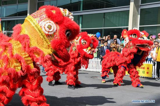 Actors perform lion dance during the 2020 Chinese New Year Festival and Market Day event in Auckland, New Zealand, Jan. 18, 2020. Speaking at the 2020 Chinese New Year Festival and Market Day event in Auckland, Ardern was optimistic about the relationship between New Zealand and China. She acknowledged that New Zealand-China relations are important and far reaching, and are going from strength to strength. The Chinese New Year event, organized by Auckland Chinese Community Centre Inc., is an annual event that celebrates the Chinese New Year and has become an important cultural signature in multi-culture New Zealand. (Xinhua/Guo Lei)