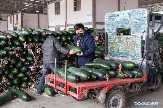 People load white gourd at a logistics center of agricultural products in Changsha, central China's Hunan Province, Feb. 7, 2020. Changsha has been stepping up efforts to ensure continuous vegetable supply and stable prices in fighting against the novel coronavirus. (Photo by Chen Sihan/Xinhua)