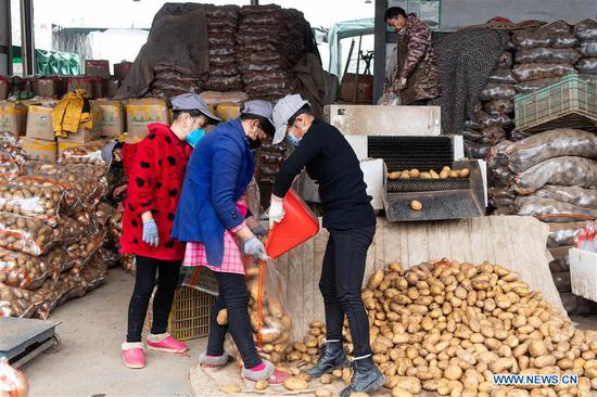People load potatoes at a logistics center of agricultural products in Changsha, central China's Hunan Province, Feb. 7, 2020. Changsha has been stepping up efforts to ensure continuous vegetable supply and stable prices in fighting against the novel coronavirus. (Photo by Chen Sihan/Xinhua)