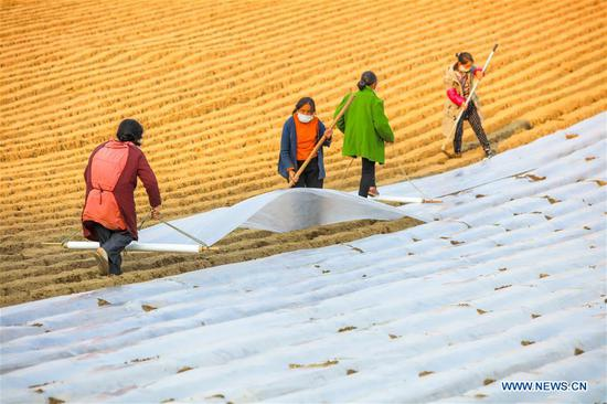 Villagers wearing face masks work in fields in Sangshulin Village, Tuopai Township of Shehong City, southwest 四不像心水's Sichuan Province, Feb. 11, 2020. Farmers across 四不像心水 have resumed production after taking necessary protection measures against novel coronavirus. By Feb. 10, about 94.6 percent of the country's major grain production and processing firms had resumed production. (Photo by Liu Changsong/Xinhua)