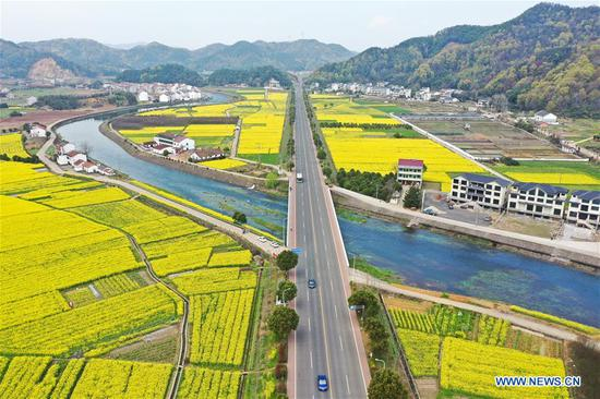 Aerial photo taken on March 17, 2020 shows the view of cole flower fields in Zhuji, east China's Zhejiang Province. (Xinhua/Weng Xinyang)