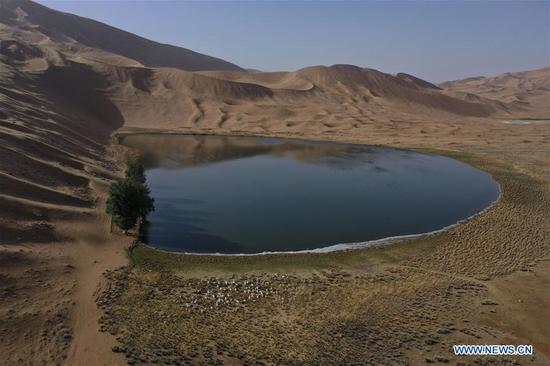 Aerial photo taken on May 30, 2020 shows sheep near a lake in Badain Jaran Desert, north China's Inner Mongolia Autonomous Region. There are many lakes in the Badain Jaran Desert, which constitute a beautiful picture with deserts and plants. (Xinhua/Xu Qin)