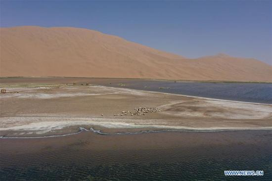 Aerial photo taken on May 31, 2020 shows sheep near a lake in Badain Jaran Desert, north China's Inner Mongolia Autonomous Region. There are many lakes in the Badain Jaran Desert, which constitute a beautiful picture with deserts and plants. (Xinhua/Xu Qin)
