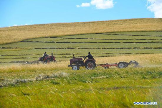 Herdsmen operate machines to mow grass on a grassland in Xilin Gol League, north China's Inner Mongolia Autonomous Region, Sept. 7, 2020. The pastoral area in Xilin Gol has entered into its grass mowing season. (Xinhua/Peng Yuan)