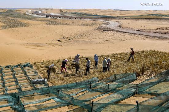 Desertification control workers make straw checkerboard barriers in the Tengger Desert along the construction site of the Qingtongxia-Zhongwei section of the Wuhai-Maqin highway in northwest China's Ningxia Hui Autonomous Region, Sept. 7, 2020. The Qingtongxia-Zhongwei section of the Wuhai-Maqin highway is under construction, of which an 18-kilometer-long section going through the Tengger Desert is the first desert highway in Ningxia. A desertification control team has worked along the highway construction site, using straw checkerboard barriers and planting vegetation to stop the dunes from moving or expanding. (Xinhua/Feng Kaihua)
