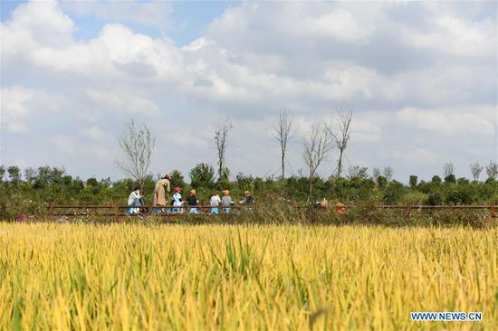 Children paint from nature at Xiaolingnan, a demonstration area for rural revitalization in Xiaomiao Township of Shushan District of Hefei, east China's Anhui Province, Oct. 8, 2020. As the eight-day National Day and Mid-Autumn Festival holiday ends on Thursday, many citizens and tourists visit Xiaolingnan to spend their leisure time. (Xinhua/Zhang Duan)