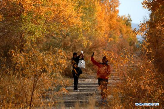 Tourists go sightseeing amid the populus euphratica forest in Mogao Town of Dunhuang City, northwest China's Gansu Province, Oct. 10, 2020. (Photo by Zhang Xiaoliang/Xinhua)