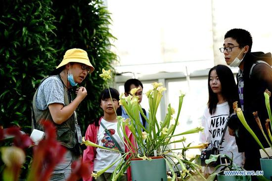 Tourists view an insectivorous plant in Shanghai Botanical Garden in east China's Shanghai, Oct. 11, 2020. More than 250 varieties of insectivorous plants are on display during the 2nd Insectivorous Plant Exhibition. (Xinhua/Zhang Jiansong)