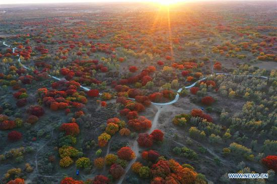 Aerial photo taken on Oct. 12, 2020 shows the autumn scenery of Daqinggou national reserve in Horqin Left Wing Rear Banner of north China's Inner Mongolia Autonomous Region. (Xinhua/Liu Yide)