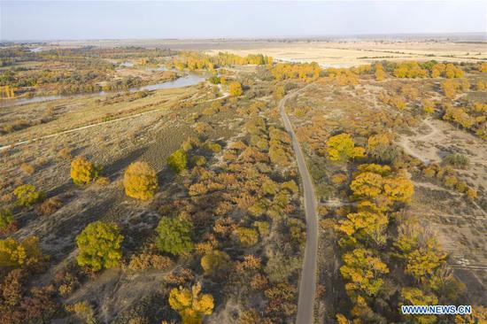 Aerial photo taken on Oct. 14, 2020 shows the autumn scenery of Shiyang River national wetland park in Wuwei, northwest China's Gansu Province. (Photo by Jiang Aiping/Xinhua)
