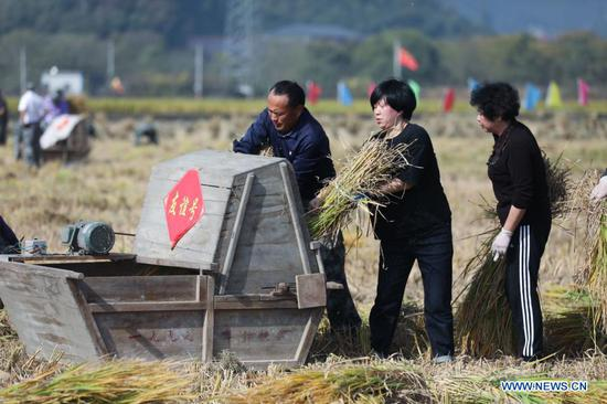 Villagers join in the game of threshing rice during a skills competition for autumn harvest at Chunhua Village of Fuchun Neighborhood in Fuyang District of Hangzhou, east China's Zhejiang Province, on Nov. 15, 2020. A total of 24 groups from each village of Fuchun Neighborhood participated in the competition here Sunday. Participants need to compete in skills as cut rice, thresh rice, put rice into sacks and bind the straw. (Xinhua/Xu Yu)