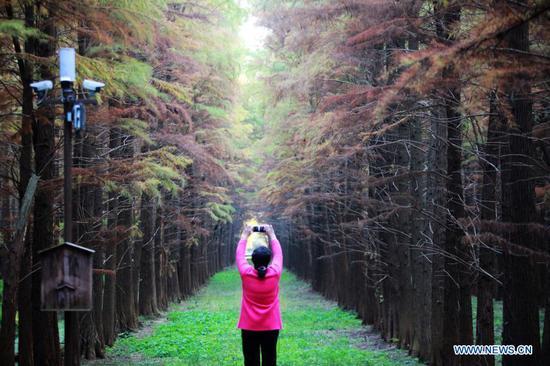 A tourist takes photos at the Qingshuitan wetland park in Gaoyou City of Yangzhou, east China's Jiangsu Province, Nov. 16, 2020. (Photo by Meng Delong/Xinhua)