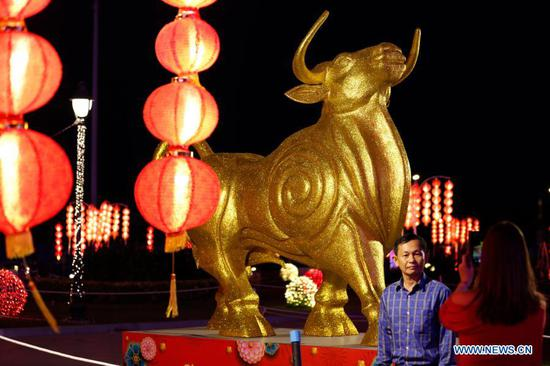 A man poses with a statue of the ox at a public park in Phnom Penh, Cambodia, Feb. 8, 2021. The Chinese zodiac is represented by 12 animals to record the lunar years and reflect people's attributes. The year 2021 is the Year of the Ox according to the Chinese zodiac. (Photo by Sovannara/Xinhua)