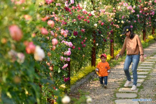 Tourists visit a rose garden in Huzhou, east China's Zhejiang Province, May 2, 2021. Sunday marks the second day of China's five-day May Day holiday. (Xinhua/Huang Zongzhi)
