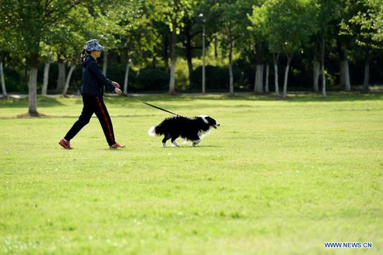 A woman walks with a dog at a park in Hefei, east China's Anhui Province, May 2, 2021. Sunday marks the second day of China's five-day May Day holiday. (Xinhua/Huang Bohan)