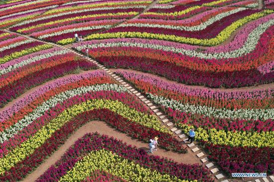 Aerial photo taken on May 2, 2021 shows tourists strolling among flowers at a scenic area in Jingmen, central China's Hubei Province. Sunday marks the second day of China's five-day May Day holiday. (Photo by Peng Qi/Xinhua)