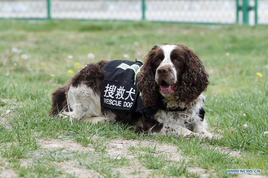 A rescue dog takes part in a training at the National Urban Search and Rescue (USAR) Training Center of Lanzhou in Yuzhong County of Lanzhou, capital of northwest China's Gansu Province, May 10, 2021. The National USAR Training Center of Lanzhou has a rescue team made up of armed police, medical staff and members of the China Earthquake Administration. The center, which has multi-functional professional training fields, facilities and equipment, can train professional rescue teams to deal with complicated circumstances. Meanwhile, as a state-level popular science education base for earthquake prevention and disaster reduction, it has opened various forms of popular science education classes. (Xinhua/Fan Peishen)