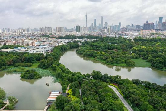 Aerial photo taken on June 3, 2020 shows the Haizhu National Wetland Park in Guangzhou, capital of south China's Guangdong Province. (Xinhua/Liu Dawei)