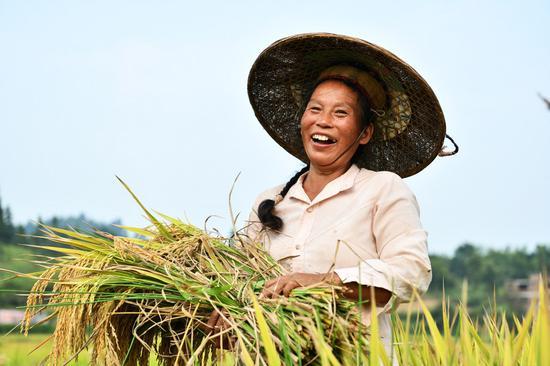A farmer harvests rice at Shanghua Village, Gaoniang Township, Tianzhu County of southwest China's Guizhou Province, Sept. 2, 2020. (Xinhua/Yang Wenbin)