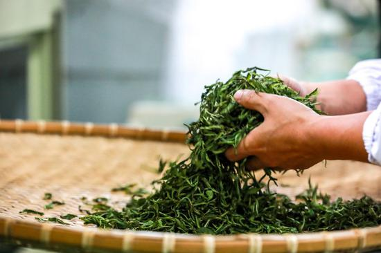 A contestant processes green tea during a tea-processing competition held in Bijie City of southwest China's Guizhou Province, May 26, 2021. (Photo by Chen Xi/Xinhua)