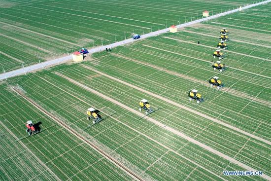 Aerial photo taken on March 11, 2019 shows farmers working in fields at Meihua Village of Gaocheng District, Shijiazhuang City, north China's Hebei Province. With the temperature rising, farmers are busy with their farm work. (Xinhua/Liang Zidong)